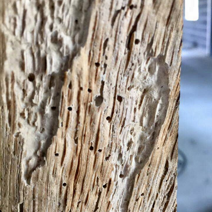 WOODWORM DAMAGE - SWAT 24/7 Pest Control - Specialist Treatment